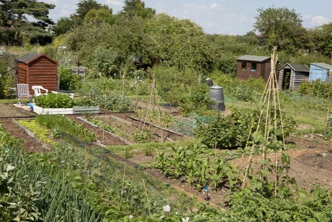 trädgård på kolonilott